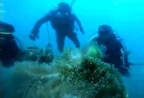 Lampia Dorong Potensi Wisata Lutim, Posal Lampia Bersama Mori Diving Club Giatkan Renang Laut Dan Selam
