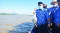 Tingkatkan Kesejahteraan Nelayan, Bupati Sidrap Tebar 80 Ribu Benih Ikan di Danau Sidenreng