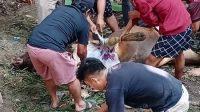 Pemkab Enrekang Sembelih Sapi untuk Kurban di 12 Tempat