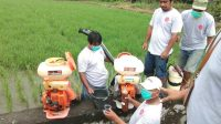 """Dinas Pertanian Lutim Gelar Aksi """"FERMEN HATI"""" Pada Dua Lokus"""